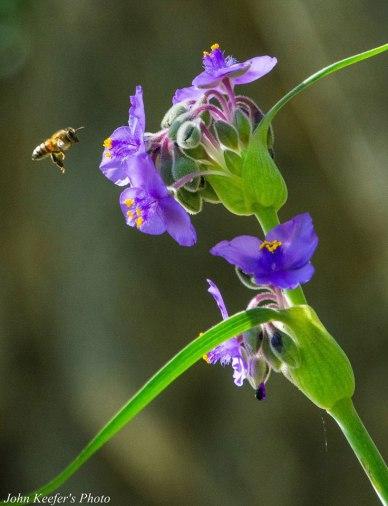 11-Bee&Flower